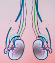 The Importance of Having a Urologist