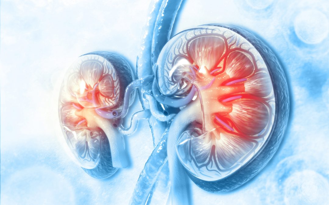 Exploring Treatments of Kidney Cancer